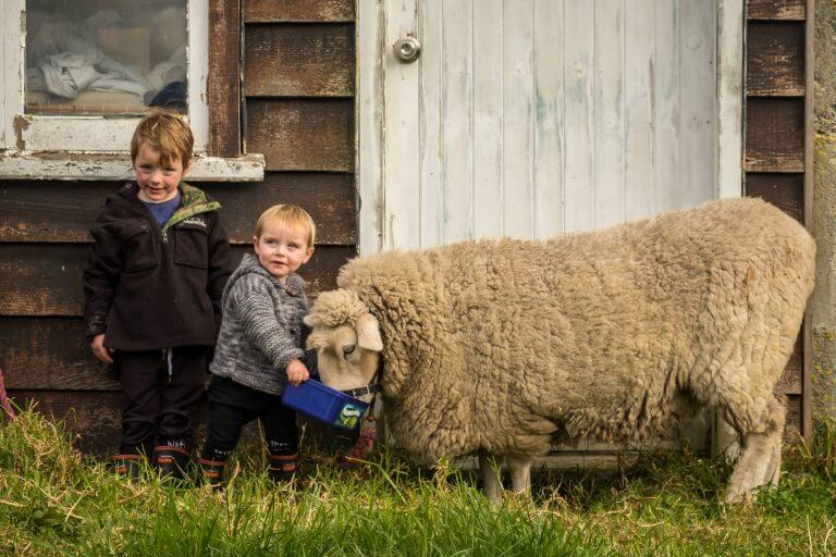 children feeding a sheep